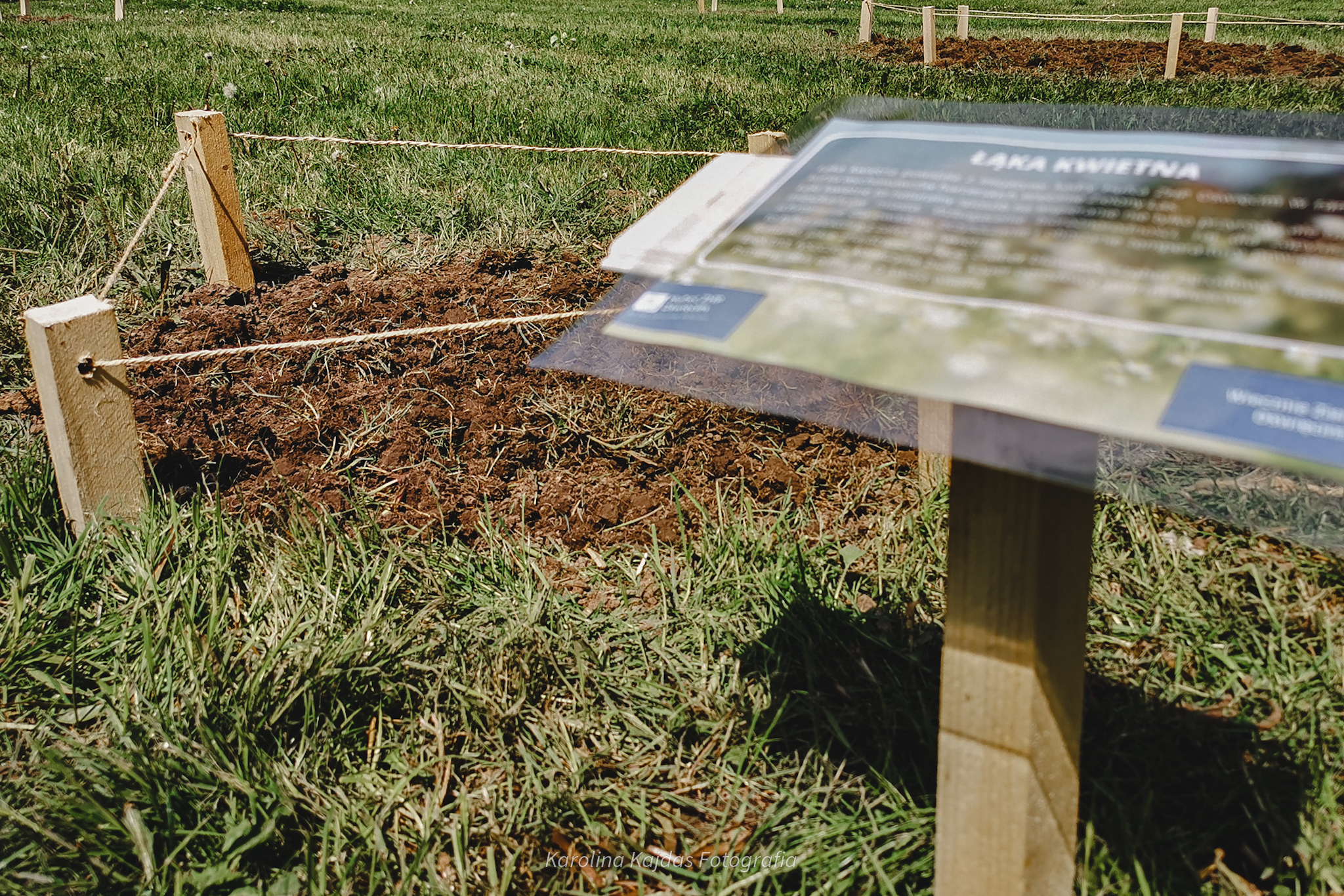 Zdjęcie przedstawia łąkę kwietną, stworzoną przez harcerzy.